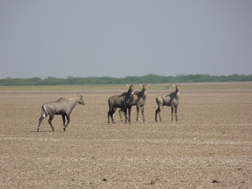 Holiday Packages For Kutch